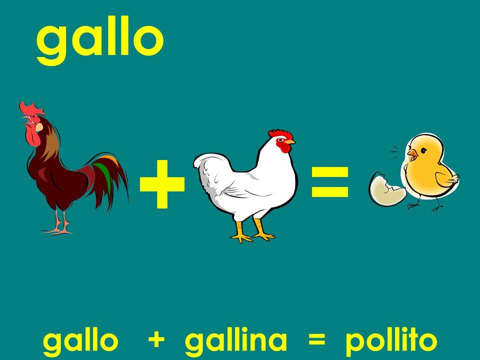 gallo + gallina = pollito
