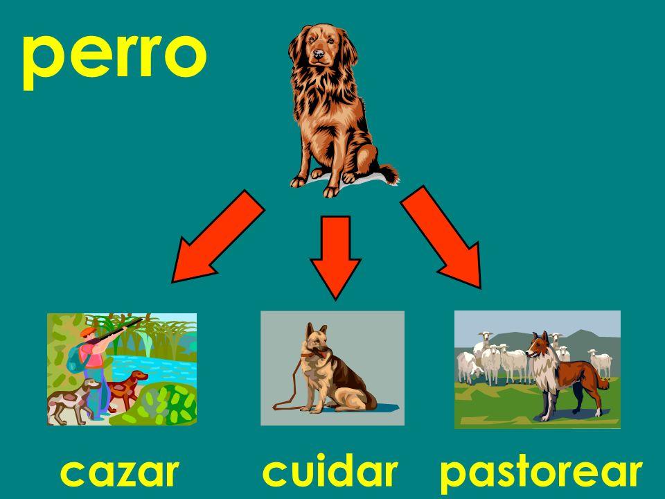 perro cazar cuidar pastorear