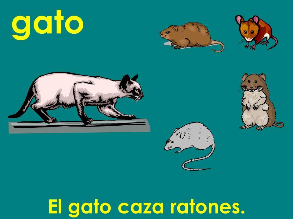 gato El gato caza ratones.