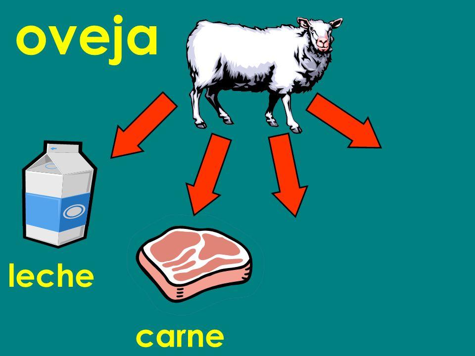 oveja leche carne