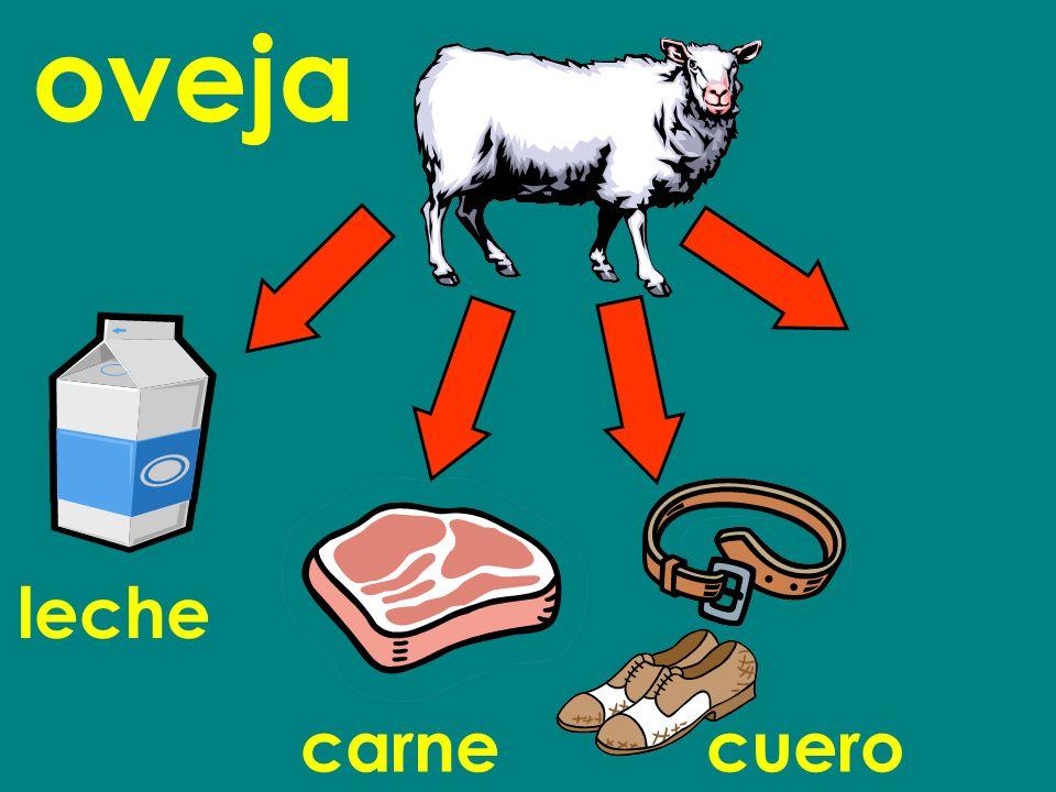 oveja leche carne cuero