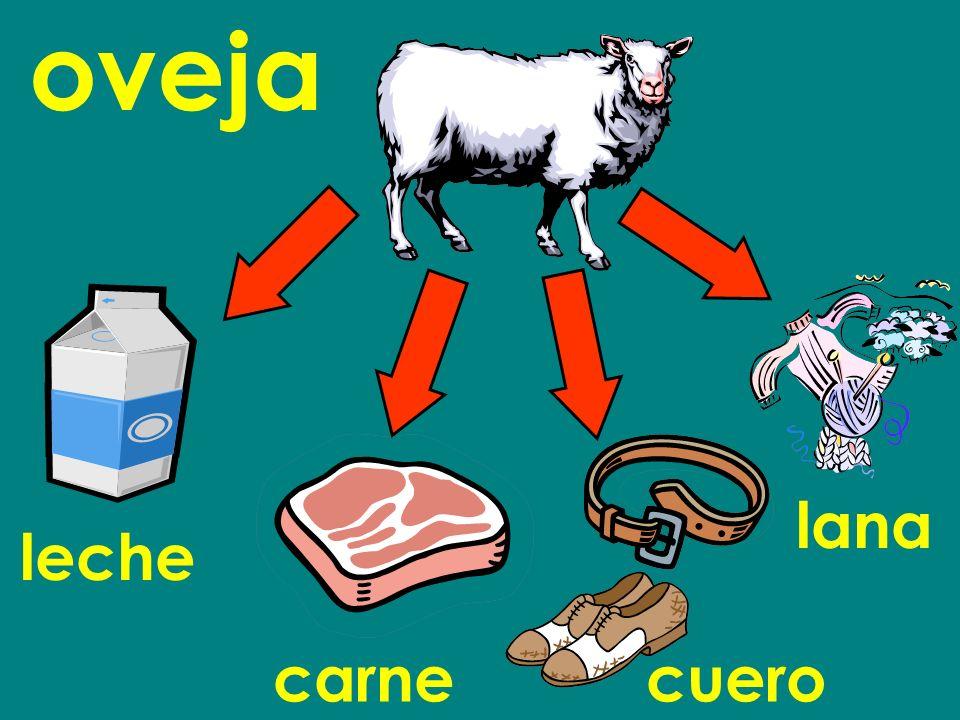 oveja lana leche carne cuero