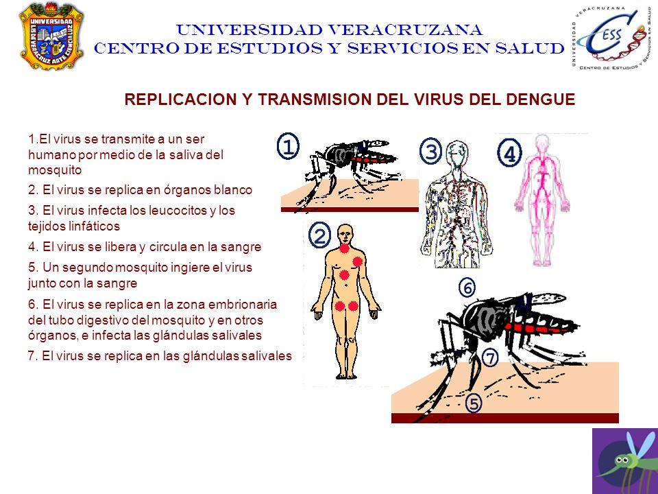 REPLICACION Y TRANSMISION DEL VIRUS DEL DENGUE