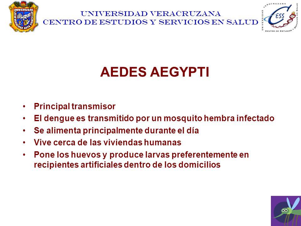 AEDES AEGYPTI Principal transmisor