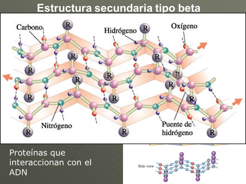 Estructura secundaria tipo beta