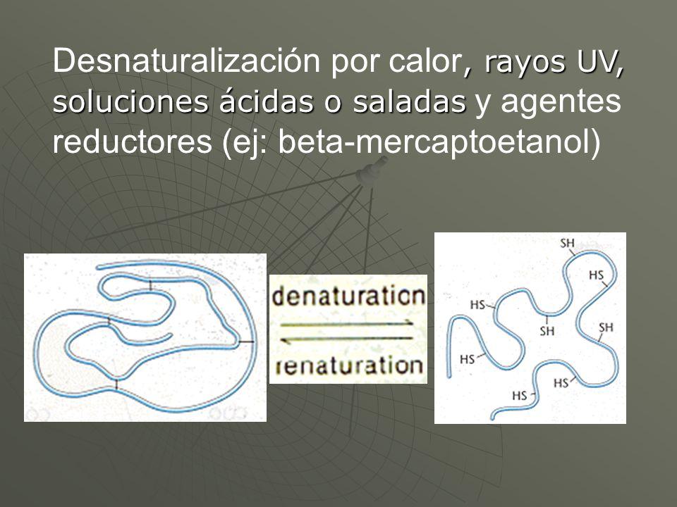 Desnaturalización por calor, rayos UV, soluciones ácidas o saladas y agentes reductores (ej: beta-mercaptoetanol)