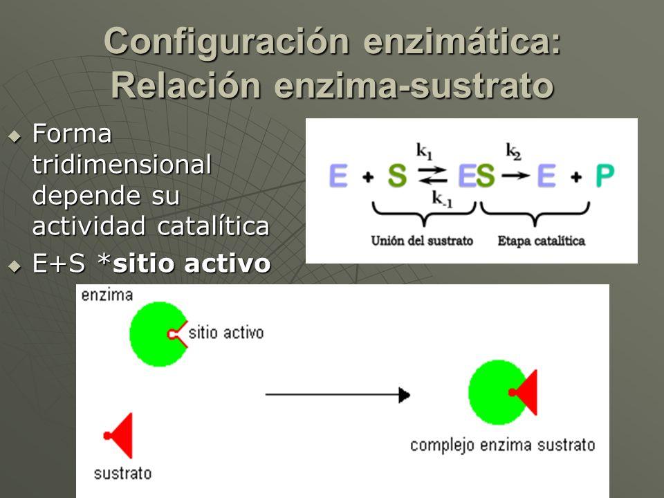 Configuración enzimática: Relación enzima-sustrato