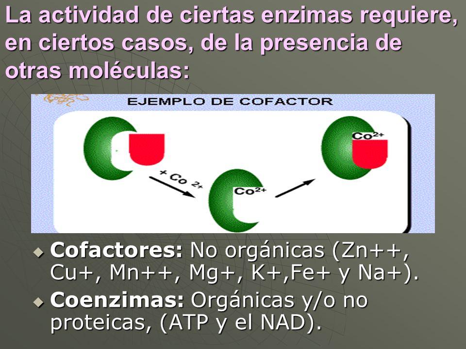La actividad de ciertas enzimas requiere, en ciertos casos, de la presencia de otras moléculas: