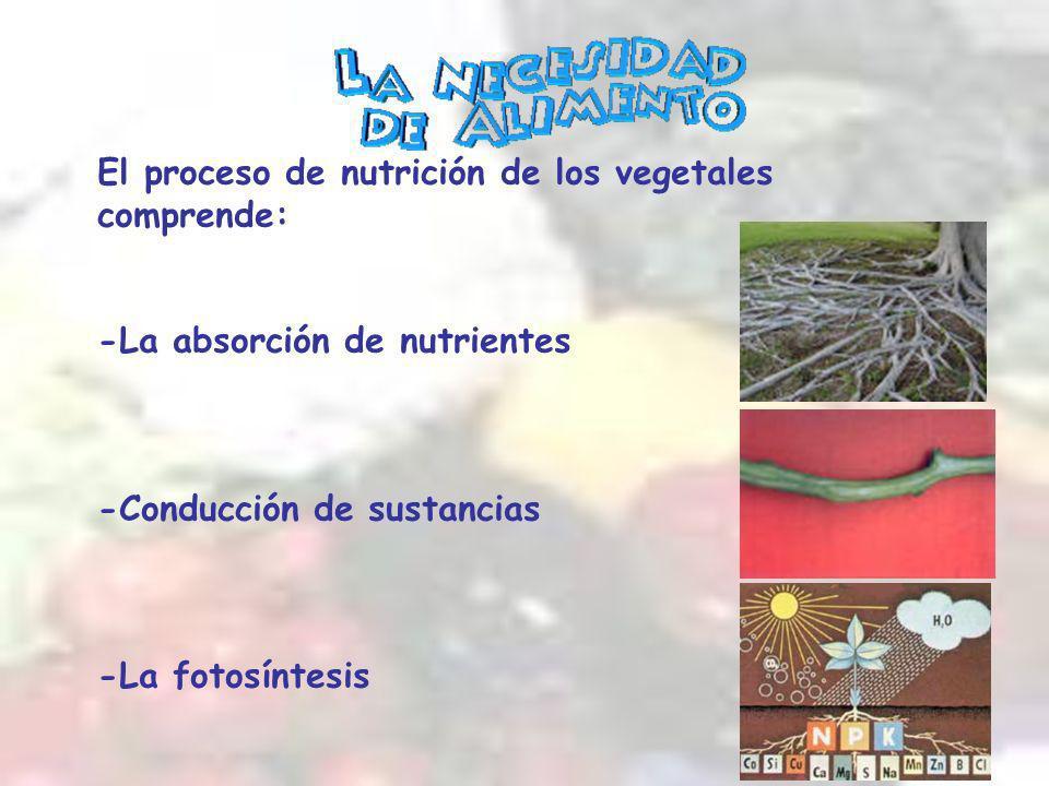 El proceso de nutrición de los vegetales comprende: