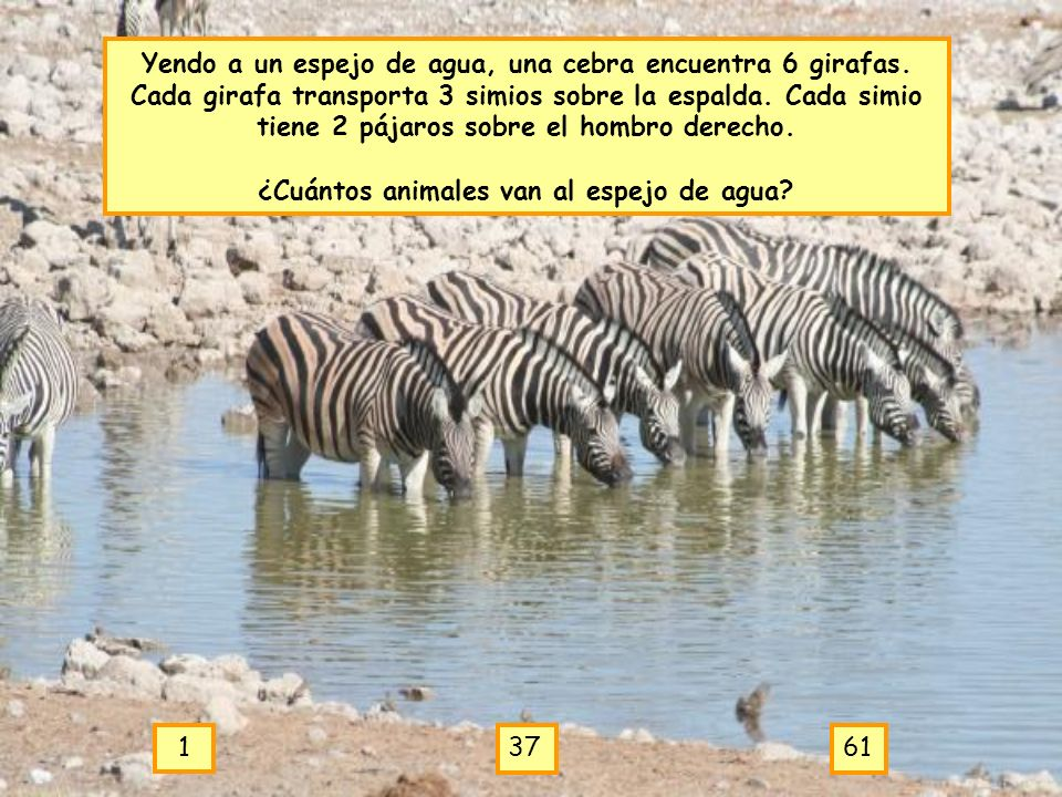 ¿Cuántos animales van al espejo de agua