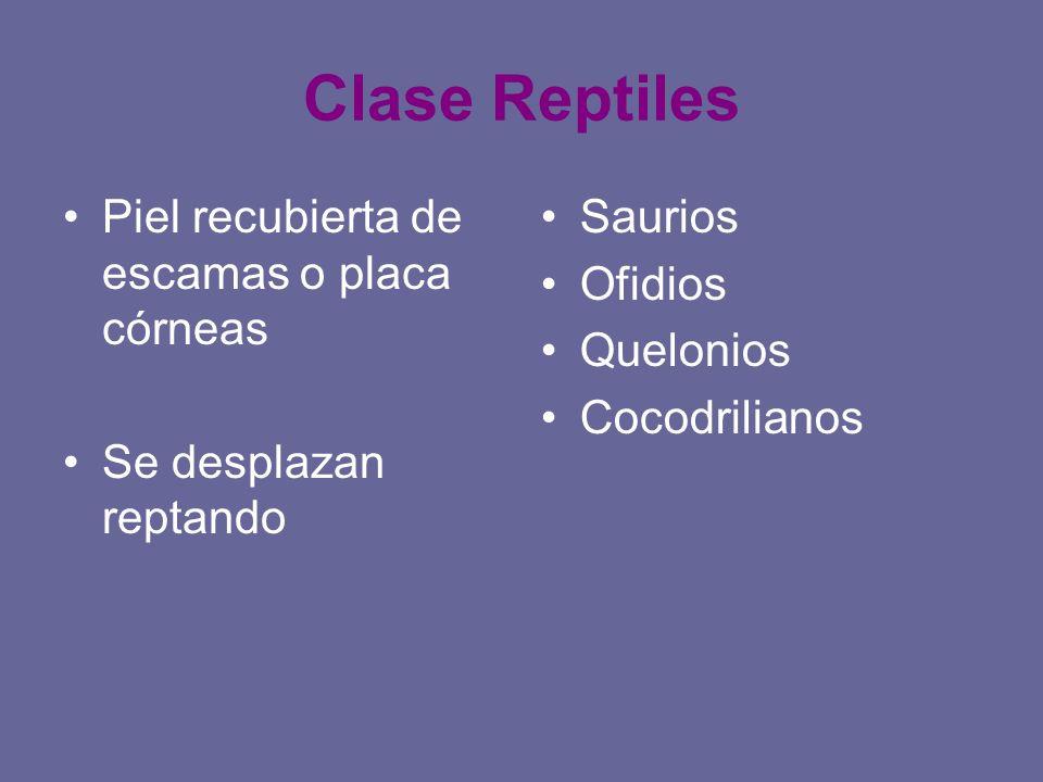Clase Reptiles Piel recubierta de escamas o placa córneas