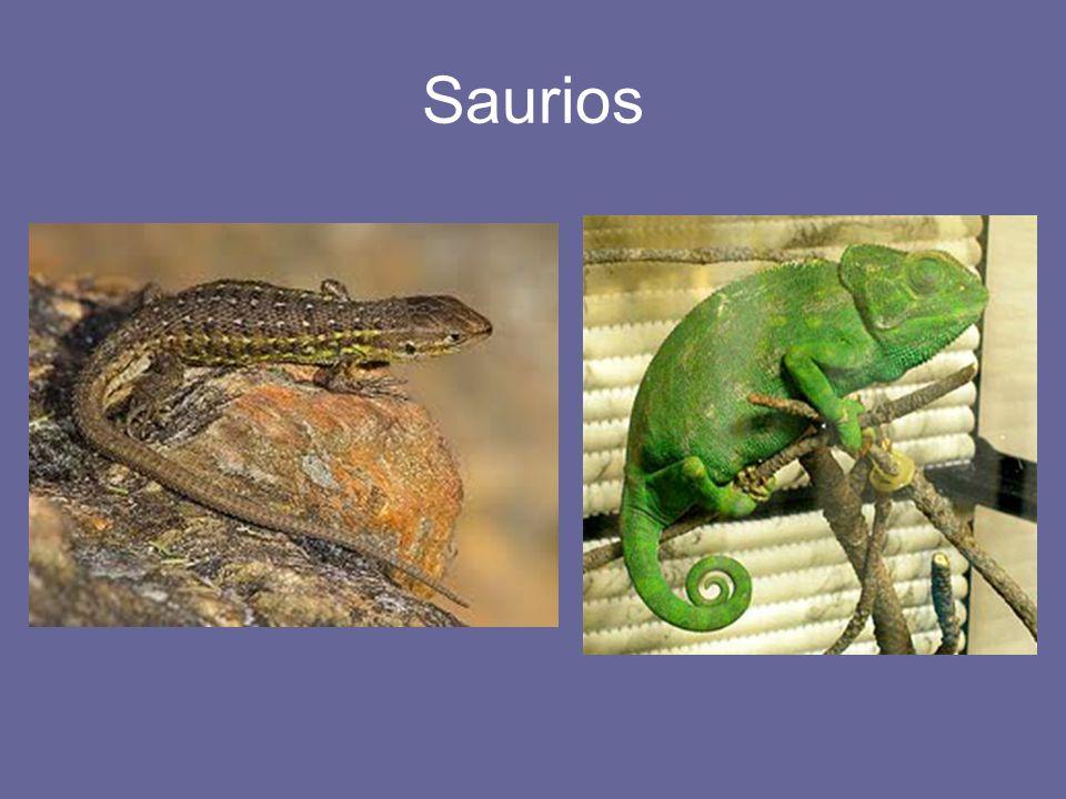 Saurios