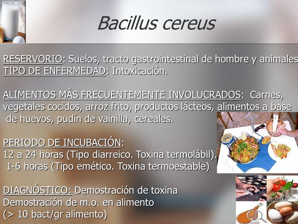 Bacillus cereus RESERVORIO: Suelos, tracto gastrointestinal de hombre y animales. TIPO DE ENFERMEDAD: Intoxicación.