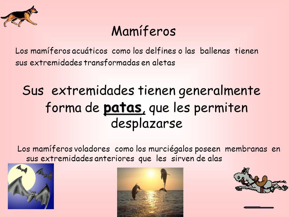 Mamíferos Los mamíferos acuáticos como los delfines o las ballenas tienen. sus extremidades transformadas en aletas.