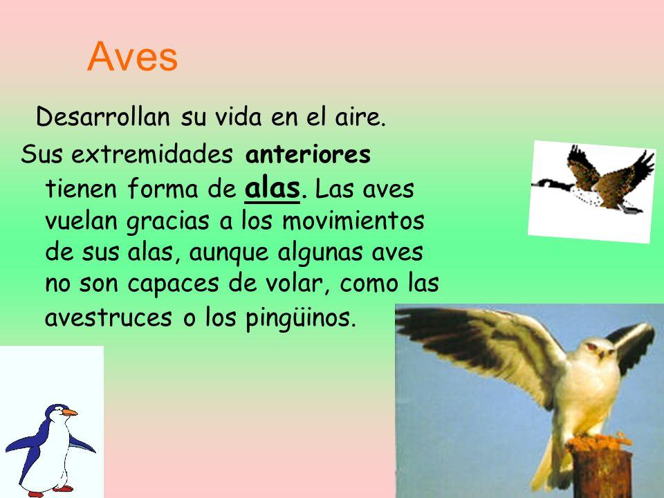 Aves Desarrollan su vida en el aire.