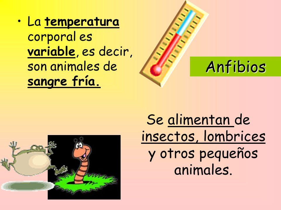 Se alimentan de insectos, lombrices y otros pequeños animales.