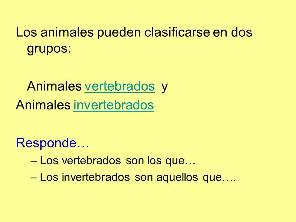 Los animales pueden clasificarse en dos grupos: