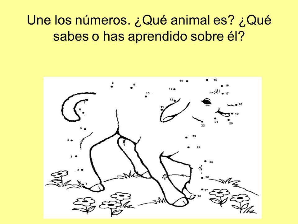 Une los números. ¿Qué animal es ¿Qué sabes o has aprendido sobre él