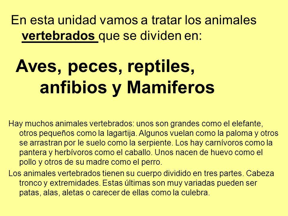 Aves, peces, reptiles, anfibios y Mamiferos