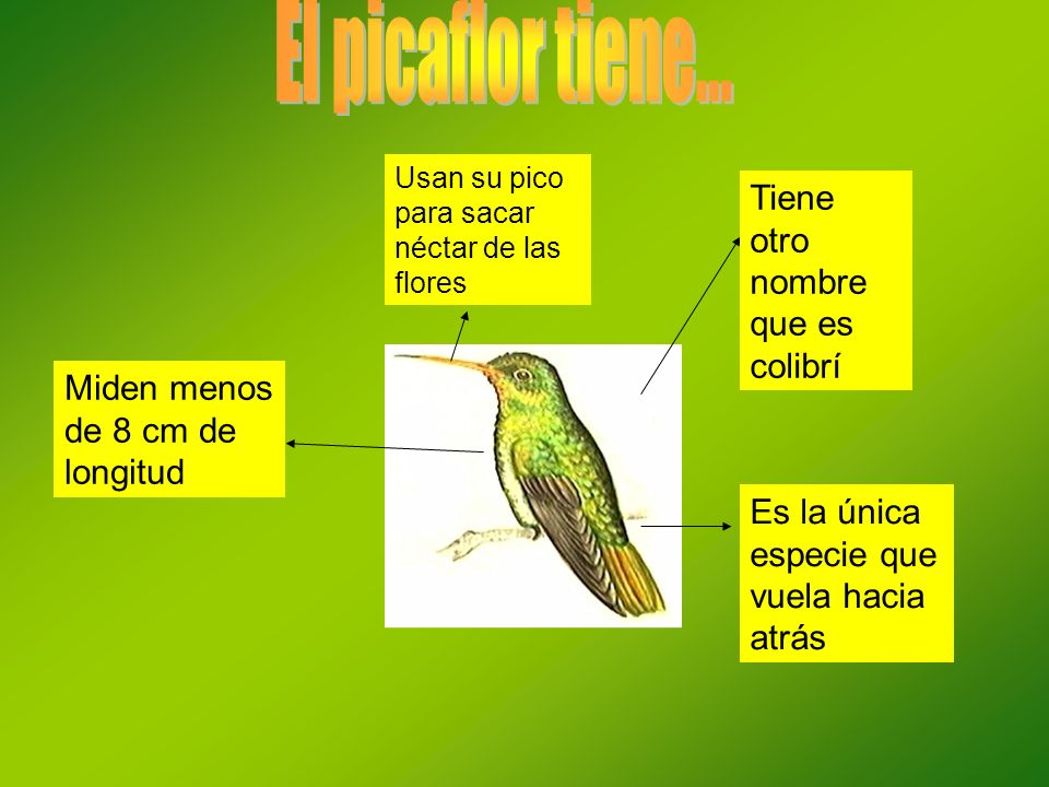 El picaflor tiene... Tiene otro nombre que es colibrí