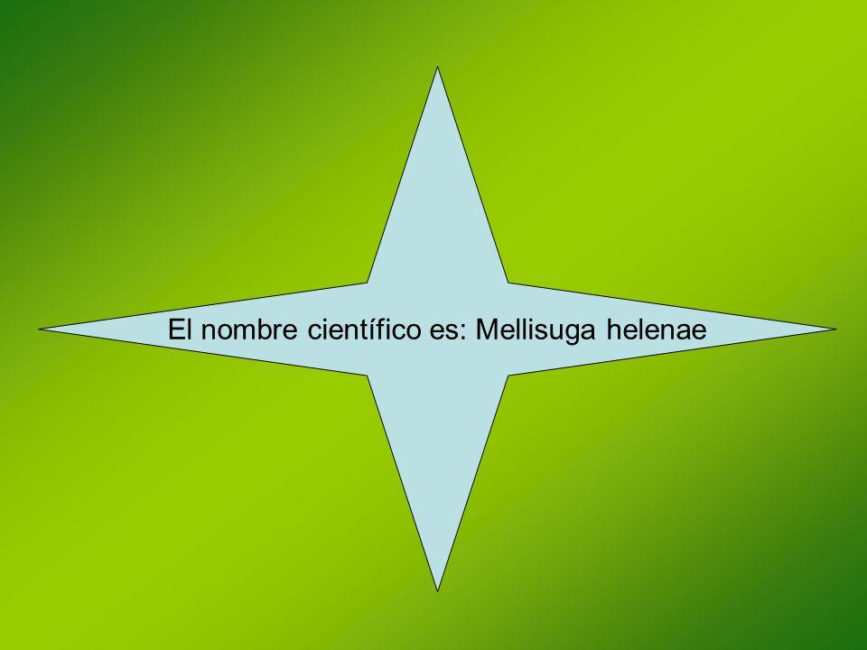 El nombre científico es: Mellisuga helenae