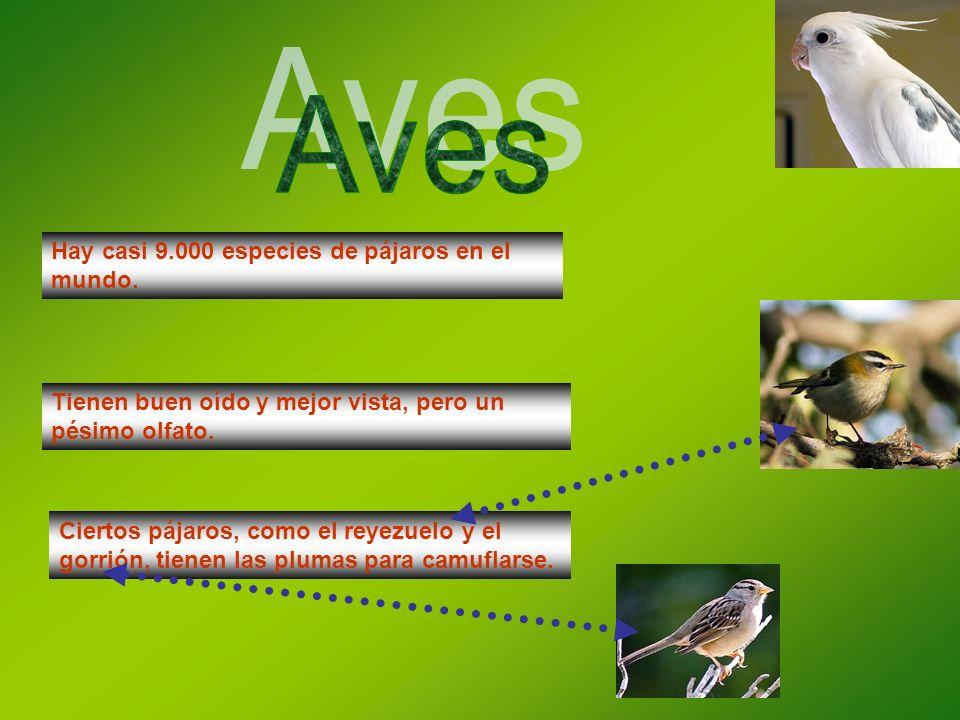 Aves Hay casi 9.000 especies de pájaros en el mundo.