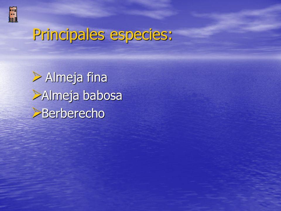 Principales especies: