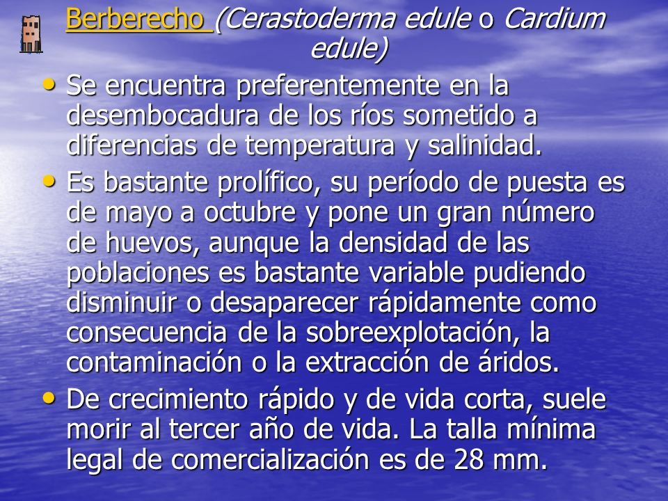 Berberecho (Cerastoderma edule o Cardium edule)
