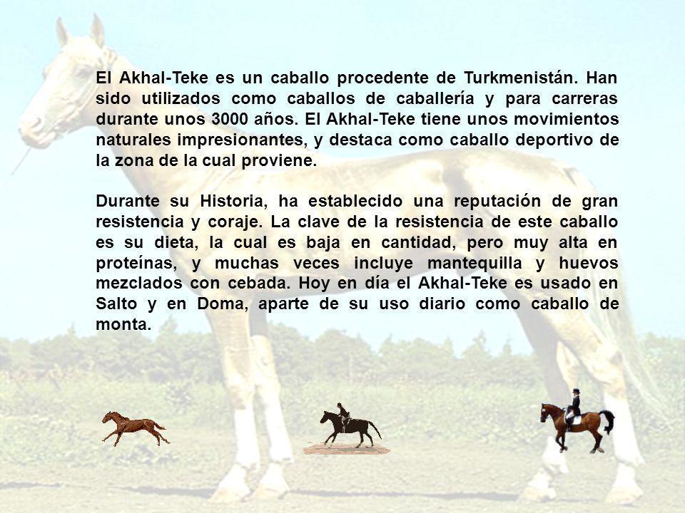 El Akhal-Teke es un caballo procedente de Turkmenistán