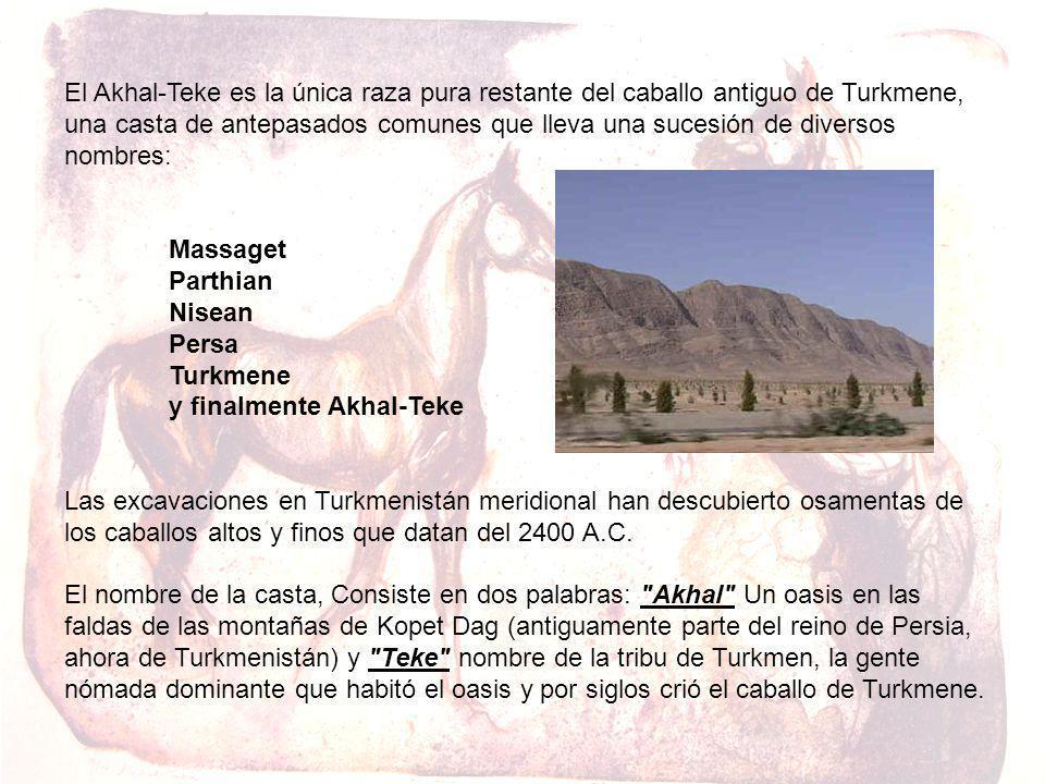 El Akhal-Teke es la única raza pura restante del caballo antiguo de Turkmene, una casta de antepasados comunes que lleva una sucesión de diversos nombres: