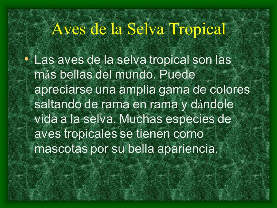 Aves de la Selva Tropical