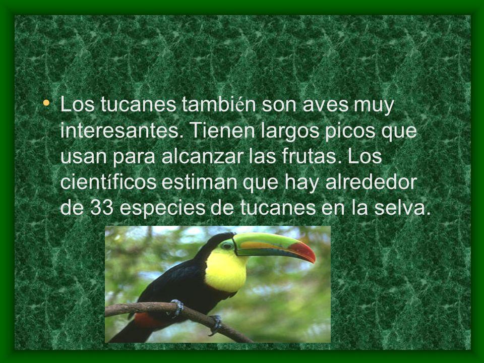 Los tucanes también son aves muy interesantes