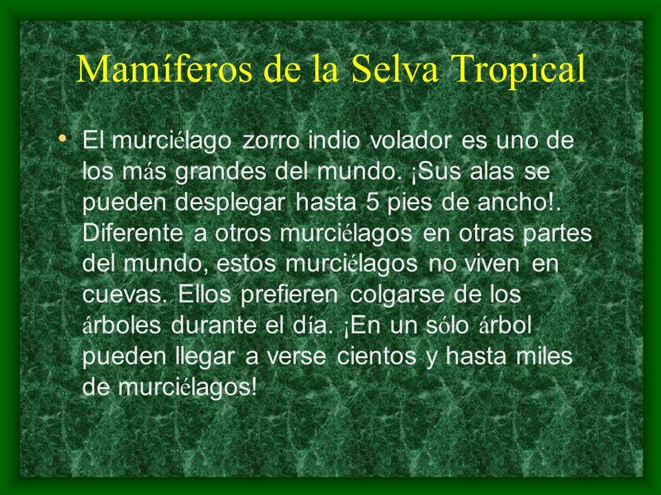 Mamíferos de la Selva Tropical
