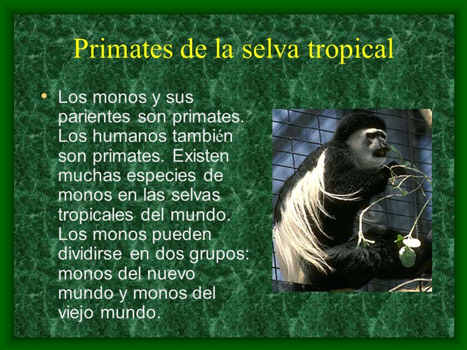 Primates de la selva tropical