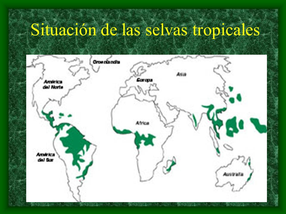 Situación de las selvas tropicales
