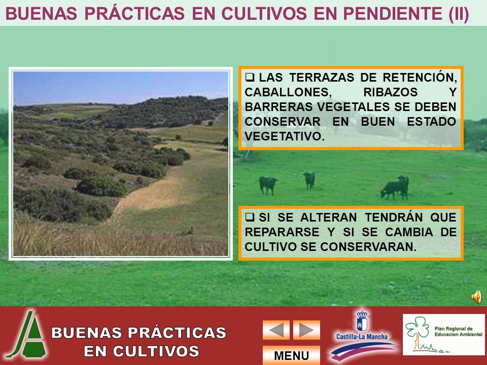 BUENAS PRÁCTICAS EN CULTIVOS EN PENDIENTE (II)