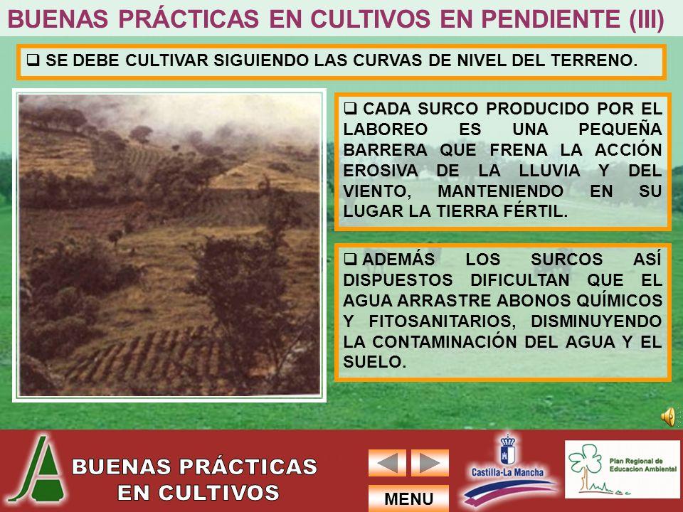 BUENAS PRÁCTICAS EN CULTIVOS EN PENDIENTE (III)