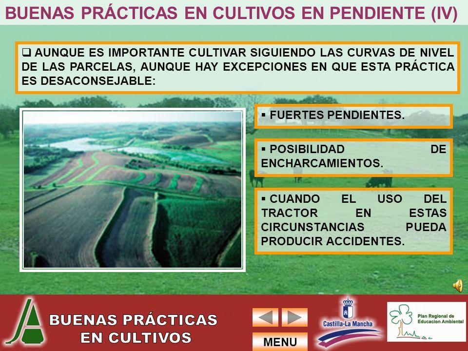 BUENAS PRÁCTICAS EN CULTIVOS EN PENDIENTE (IV)