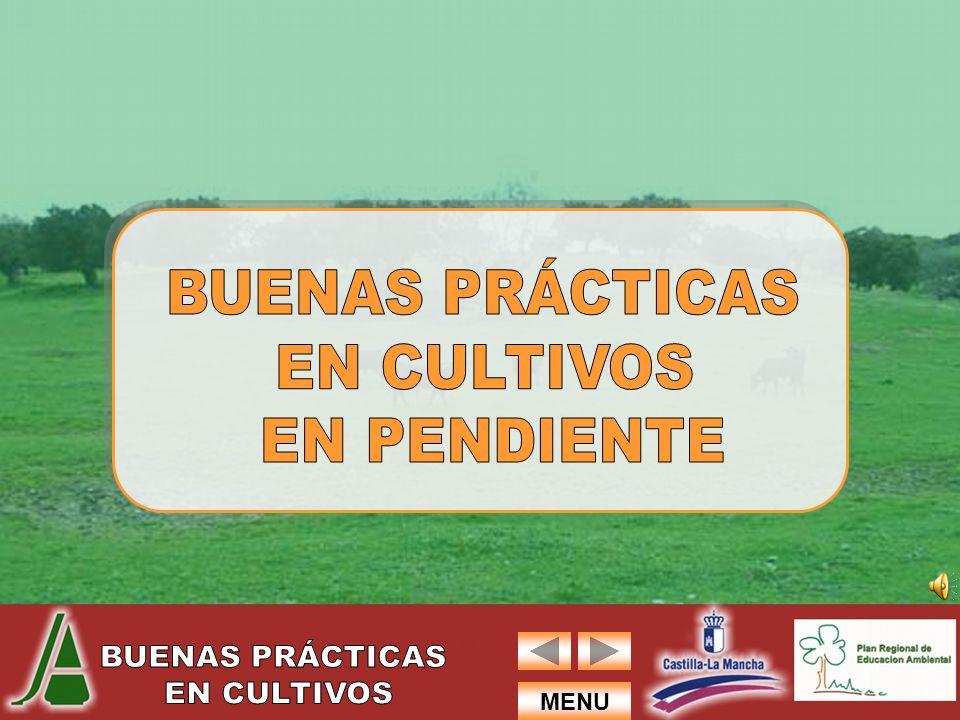 BUENAS PRÁCTICAS EN CULTIVOS EN PENDIENTE