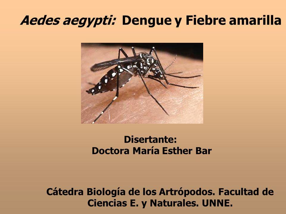 Aedes aegypti: Dengue y Fiebre amarilla