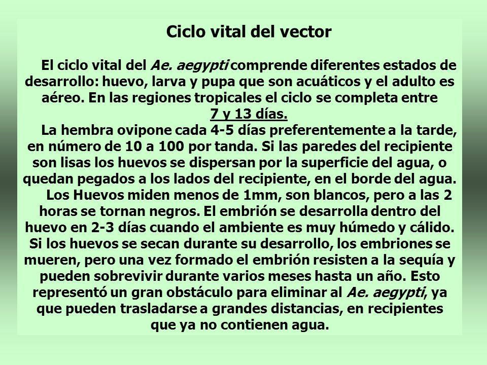 Ciclo vital del vector