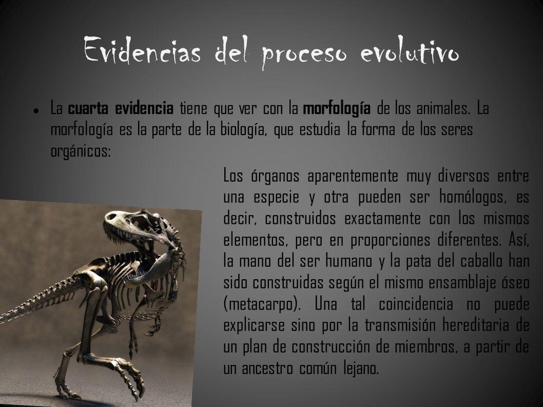 Evidencias del proceso evolutivo