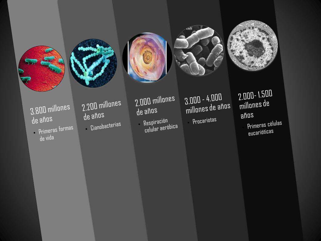 2.000- 1.500 millones de años 3.000 - 4.000 millones de años