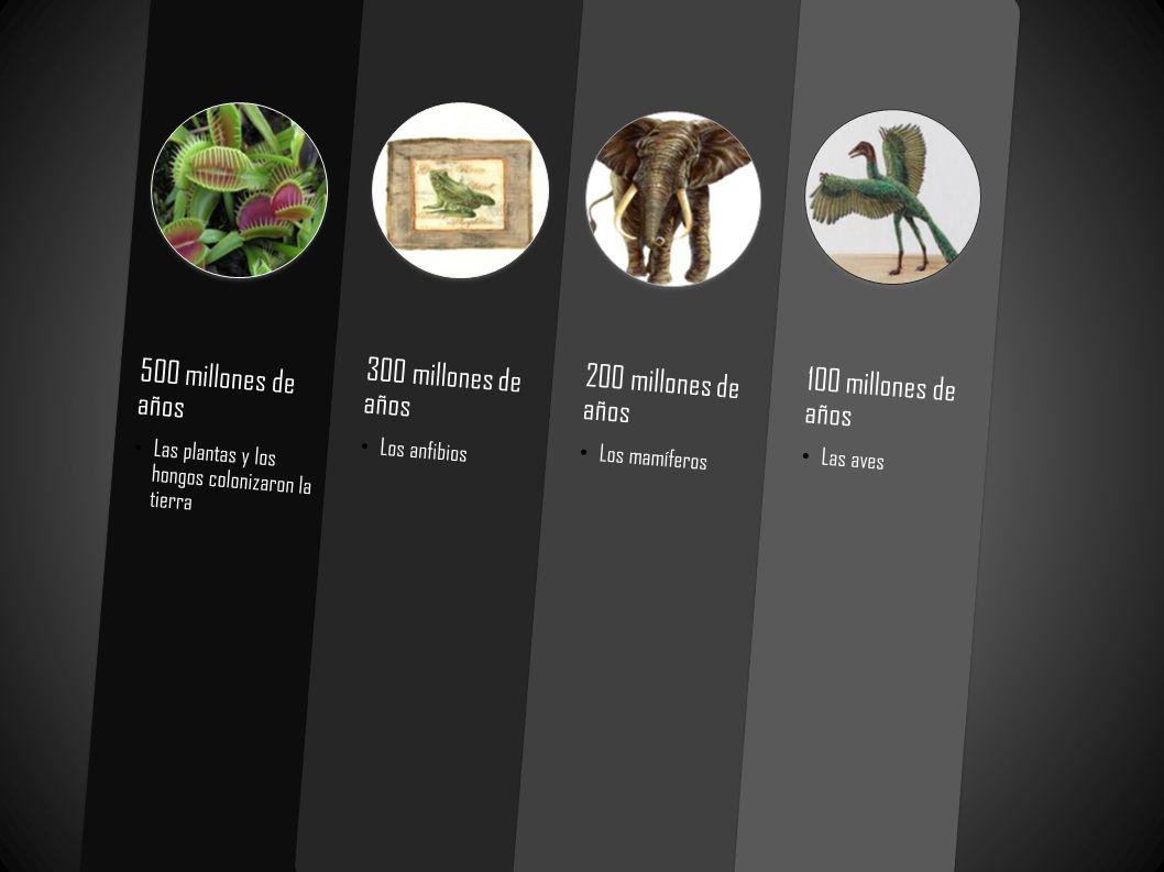 500 millones de años 300 millones de años 200 millones de años