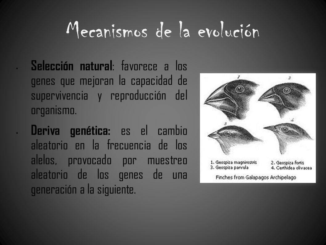 Mecanismos de la evolución