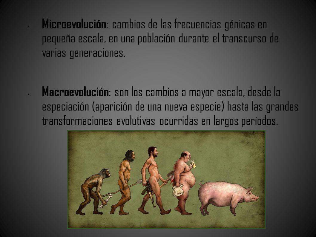 Microevolución: cambios de las frecuencias génicas en pequeña escala, en una población durante el transcurso de varias generaciones.