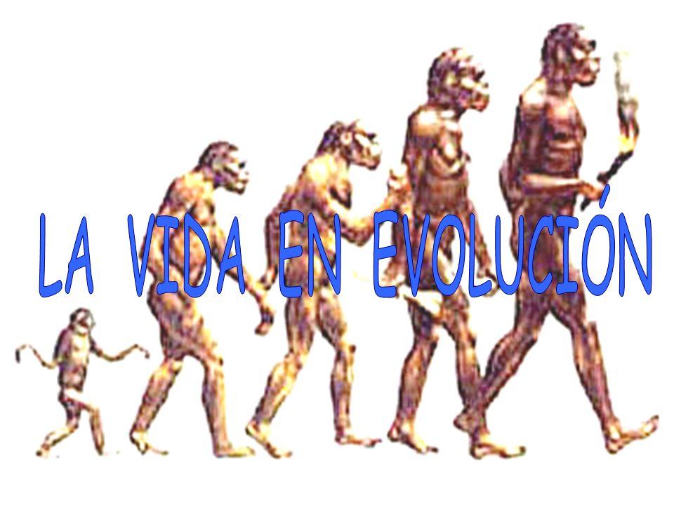 LA VIDA EN EVOLUCIÓN