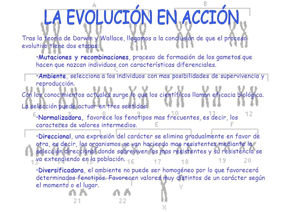 LA EVOLUCIÓN EN ACCIÓN Tras la teoría de Darwin y Wallace, llegamos a la conclusión de que el proceso evolutivo tiene dos etapas: