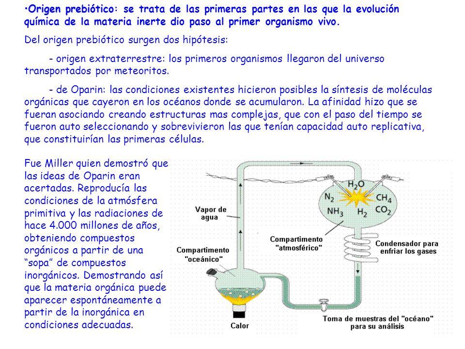 Origen prebiótico: se trata de las primeras partes en las que la evolución química de la materia inerte dio paso al primer organismo vivo.
