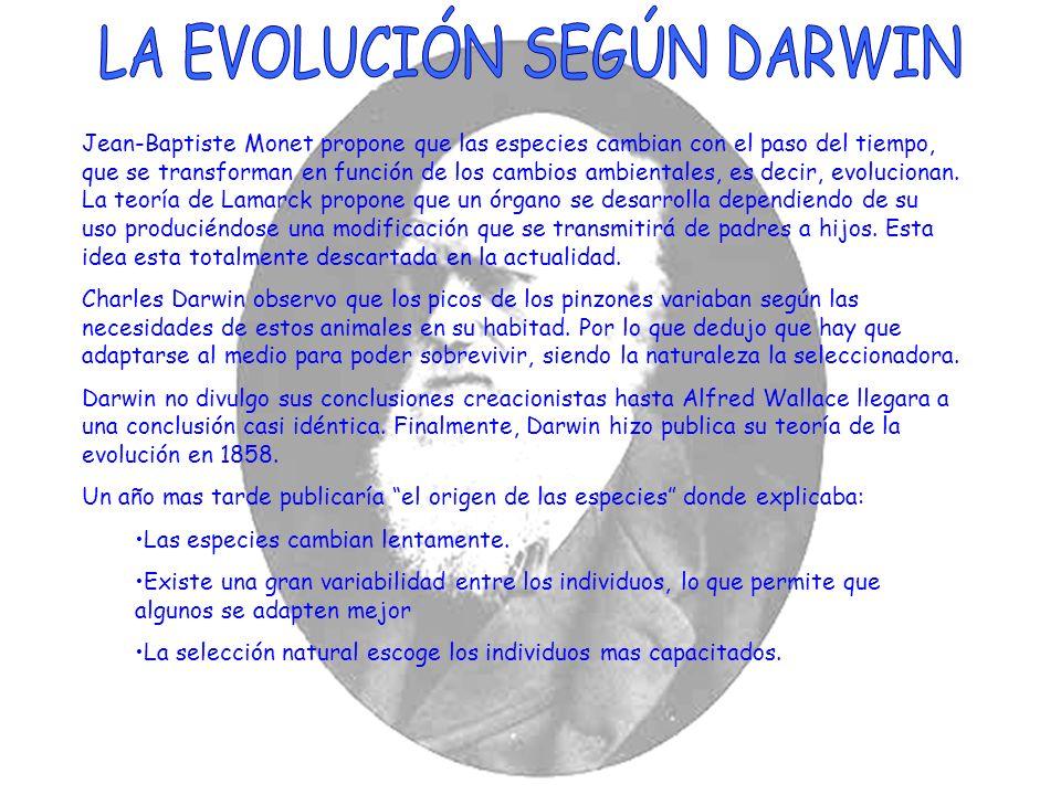 LA EVOLUCIÓN SEGÚN DARWIN